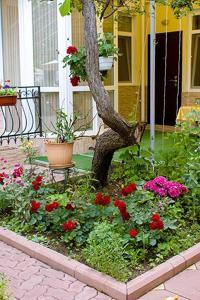 Сад в Дом Сова