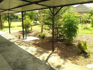 A garden outside Rudi's House