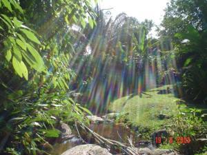 A garden outside Chale Ilhabela