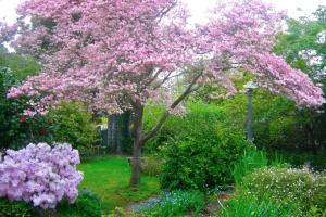 A garden outside Dangal Gardens