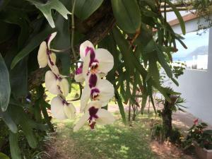Jardín al aire libre en Casa Flor