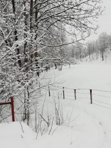 Pensiunea Mara зимой