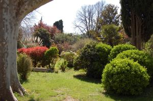 A garden outside Le Mas Ferrand