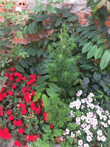 A garden outside Tam Coc Westlake Homestay