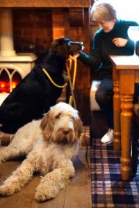 Pet or pets staying with guests at The Kings Lodge Inn