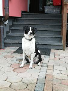 Pet or pets staying with guests at Haus Höll Herta