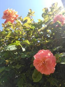 Сад в Guest house Visit