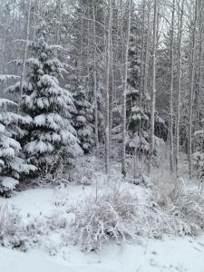 Ylijarvi cottages talvella