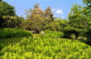 A garden outside Hotel Garni