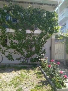 A garden outside Зелёный дворик