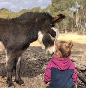 Children staying at Donkey Tales Farm Cottages