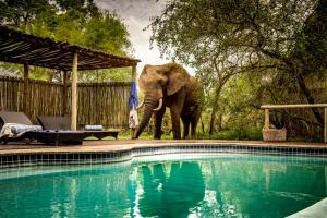 The swimming pool at or near Rhino Post Safari Lodge