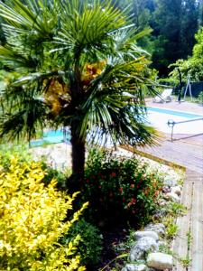 The swimming pool at or near Auberge de Barnas