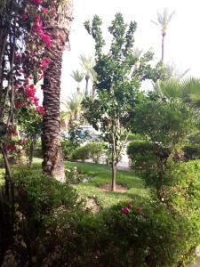 Κήπος έξω από το Riad H