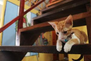 Pet or pets staying with guests at Ciao Cacao Hostel & Vegan Cafe