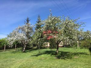 Ogród w obiekcie Borywood