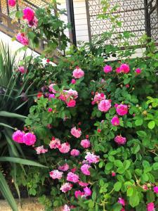 Сад в Гостевой дом РИМ