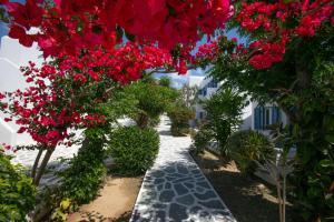 A garden outside Acrogiali Beach Hotel Mykonos