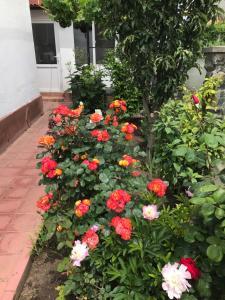 A garden outside Casa La Musteata