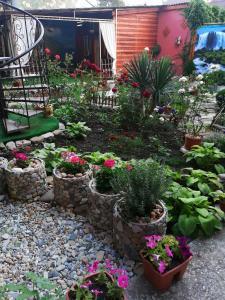 A garden outside Sabai