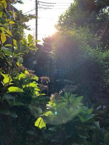 KAZENOMORI KITCHENにある庭