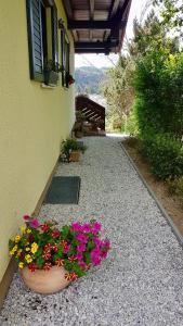 Ein Garten an der Unterkunft Ferienwohnung im Landhaus am Nationalpark