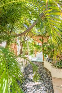 Um jardim em Little Jungle Apartments Aruba