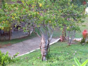 A garden outside Pousada Trilha do Velho Chico