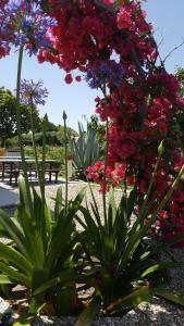 A garden outside Domo Serra E Mesu