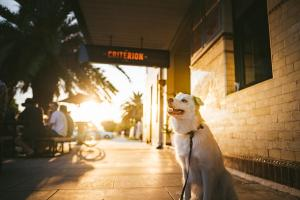 Pet or pets staying with guests at The Criterion Hotel