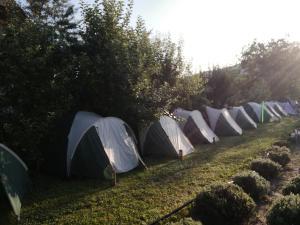 A garden outside Lavender Garden Camping