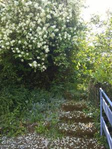 A garden outside Moulin De Cornevis Bed and Breakfast