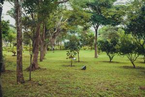 Сад в Pousada Ibiapaba