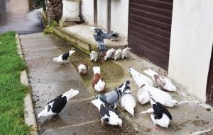 Tiere im Ferienhaus oder in der Nähe