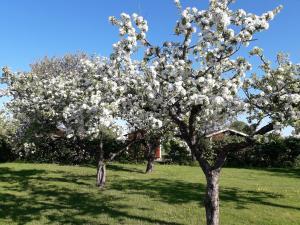 En trädgård utanför Mellomgården