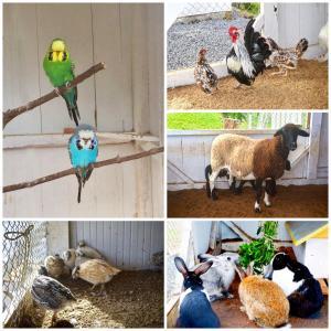 Animais no hotel ou nos arredores