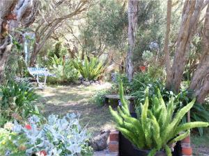 A garden outside Blairgowrie Beach Escape