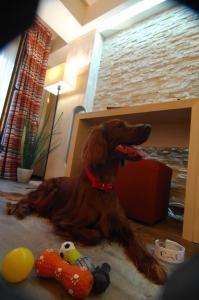 Animal sau animale de companie care stau la Ioana Hotel