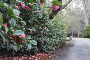 A garden outside Woodlands Rainforest Retreat