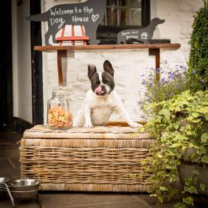 Pet or pets staying with guests at The Greyhound Inn and Hotel