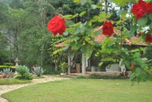A garden outside Pousada Quinta dos Pássaros