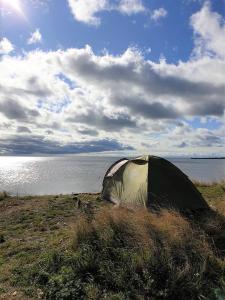 Dyr på campingpladsen eller i nærheden