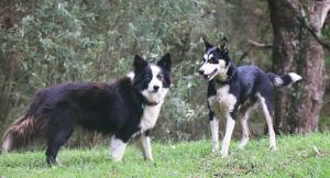 Pet or pets staying with guests at Johanna River Farm & Cottages