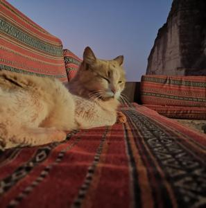 Pet or pets staying with guests at Bedouin Lifestyle Camp