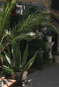 Zahrada ubytování Apartman Olesnik