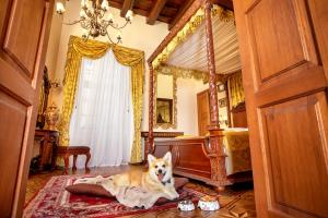 Pet or pets staying with guests at Hotel U Prince