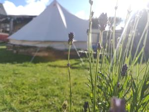 A garden outside Dunfanaghy Glamping