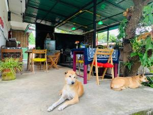 Pet or pets staying with guests at Pai Yard Guest House
