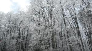 Pensiunea Diva iarna