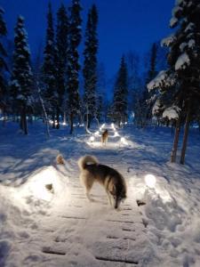 База отдыха Экостровская зимой